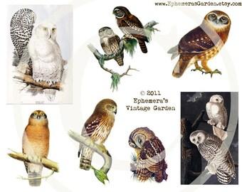Owls Digital Collage Sheet