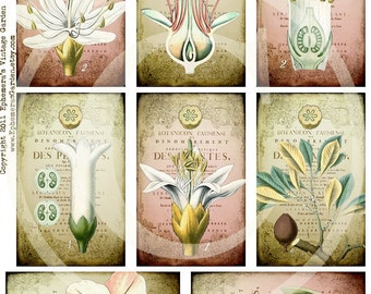 Botanical Whimsy Hang Tags - Digital Collage Sheet