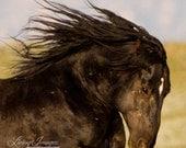 Wild Black Stallion Runs Free - Fine Art Wild Horse Photograph