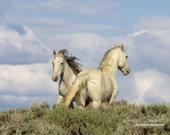 Stay or Go - Fine Art Wild Horse Photograph - Wild Horse - Wild Hoofbeats - Adobe Town
