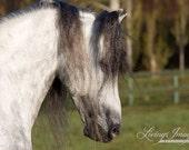 Spanish Mane - Fine Art Horse Photograph