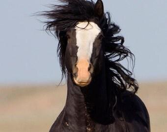 Black Stallion Runs Close - Fine Art Wild Horse Photograph - Wild Horse