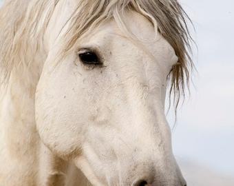 The Spanish Stallion Comes Close - Fine Art Wild Horse Photograph - Wild Horse