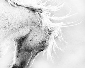 Freedom's Head Shake - Fine Art Wild Horse Photograph - Wild Horse - Black and White - Adobe Town