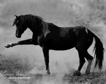 Wild Spanish Walk - Fine Art Wild Horse Photograph - Wild Horse - Black and White - Fine Art Print