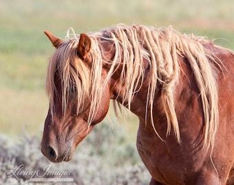 Wild Mane - Fine Art Wild Horse Photograph - Wild Horse - McCullough Peaks