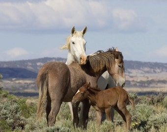 Adobe Town Family - Fine Art Wild Horse Photograph - Wild Horse - Adobe Town - Fine Art Print