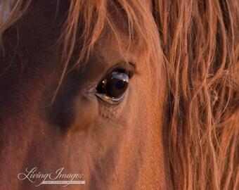 Wild Stallion's Eye - Fine Art Wild Horse Photograph - Wild Horse - Horse Eye - McCullough Peaks
