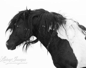 Black and White - Fine Art Wild Horse Photograph - Wild Horse - Washakie - Black and White