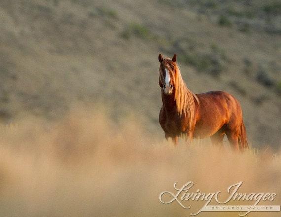 Sunrise Stallion - Fine Art Wild Horse Photograph - Wild Horse - Adobe Town - Fine Art Print
