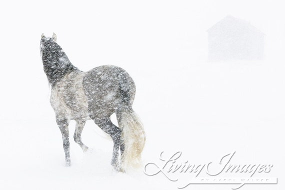 Mare in a Blizzard II - Fine Art Horse Photograph - Horse - Snow - Fine Art Print
