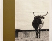 lone bull / large format halftone print / 24x36 black and white poster