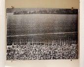 mâts de Magnolia / demi-teinte grand format d'impression / 24 x 36 affiche noir et blanc