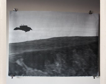 bird in flight / large format halftone print / 24x36 black and white poster