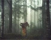 Winter mist in the deep dark woods- 8x12 Photo Print