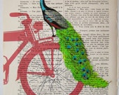 Peacock on red bicycle - Original Illustration-Art Print-Art Poster- Hand Painting Mixed Media- French 1920 Vintage Paper xyz