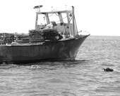 Thimble Island Oyster CSF 2013 Share