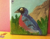 Superb Starling 4x4 acrylic painting