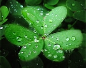 LUCKY Jewels - Soft rain decorates these two stunning macro shamrock images. Vibrant heart-wrenching green scattered with silvery baubles sent from above. Two Fine Art Photographic Prints, 10x10.