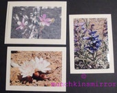 Set of 3 Blank Photo Note Cards With Desert Wildflowers