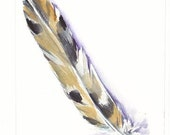 OWL Feather watercolor  5x7 inch O.R.I.G.I.N.A.L watercolor FREE SHiPPiNG