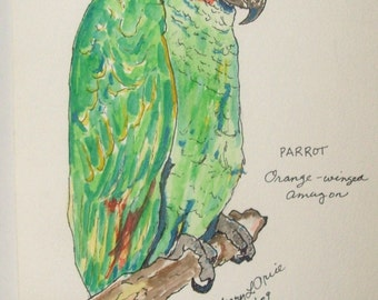 Orange-winged Green Parrot (blank card, print)