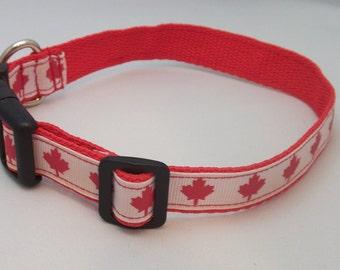 Canada Day maple leaf dog collar