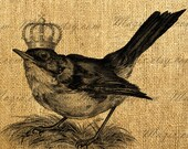Vintage Sparrow Bird With The Crown Digital Image, Download and Print, Great For Image Transfer on Pillows, Tea Towels and more - Style. 259