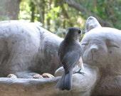 Large Concrete Cat Bird Bath or Feeder