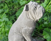 Large concrete BULLDOG Statue
