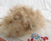 Mini Rex Rabbit Fur