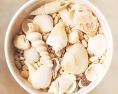 Bowl of Beach Shells, still life photo, beach house decor, shore, neutral, ivory, seashell, white, creamy soft, coastal, beige - semisweetstudios