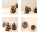 Pinecone Photo Set, Home Decor, Still Life, Neutral,  Nature Photography, cream, beige, brown, gold, affordable
