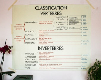 Vintage Chart, Classification Vertrebres Double Sided Print Industrial