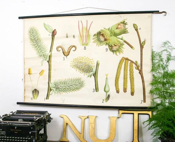 RESERVED FOR DONNA Botanical chart Hazelnut Genuine vintage school print Paper on linen, Copenhagen