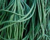 Organic Heirloom Yard Long Asparagus Bean Seeds Rare