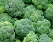 Broccoli Calabrese Hardy Cool Weather Variety Excellent Mild True Flavor Organically Grown Best Crop Rare Seeds