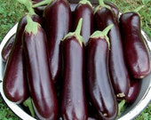 Eggplant Heirloom Variety Diamond Organically Grown Italian Seed