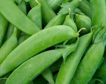 Sugar Snap Pea Best Tasting Hugely Popular Extra Crisp and Juicy Pods Grown to Organic Standards Heirloom Seeds