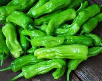 Pepperoncini Italian Heirloom Pepper Seeds
