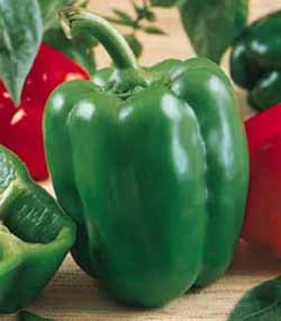 CLOSE OUT Sale Organic Heirloom California Wonder Bell Pepper Seed