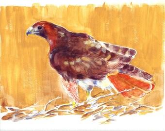 Red-tailed Hawk Print of Original Watercolor