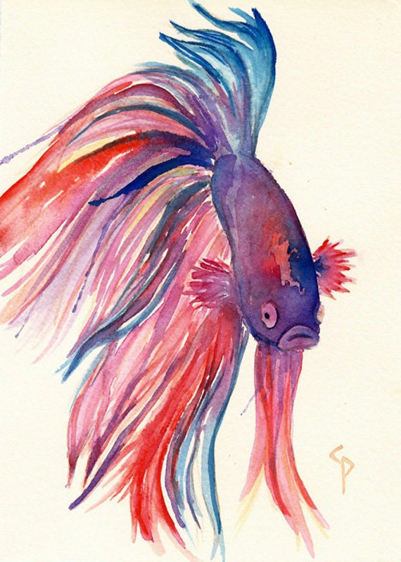 Beta fish bubba original watercolor illustration by for Betta fish painting