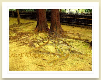 "Modern Wall Decor Feng Shui Yellow Sand ""Tree Roots / Sketches from Kyoto"" Zen Digital Print fine art photography 8"" x 10"""