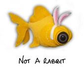 Not-A-Rabbit