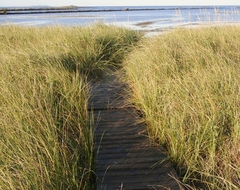 """Path to the beach in Biddeford Pool Maine -  5 x 7"""" color print"""