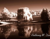 Weeping Willow & Lake Reflection Infrared Sepia Art Print