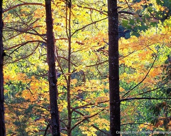 Fall Leaves, Matted Nature Photography