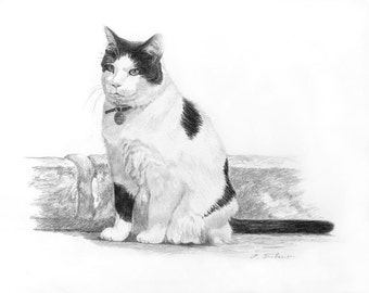 Black and White Cat Art, Cat Art Print, Black and White Cat Drawing, Cat With Wall Print, Cat Print from Pencil Drawing by P. Tarlow