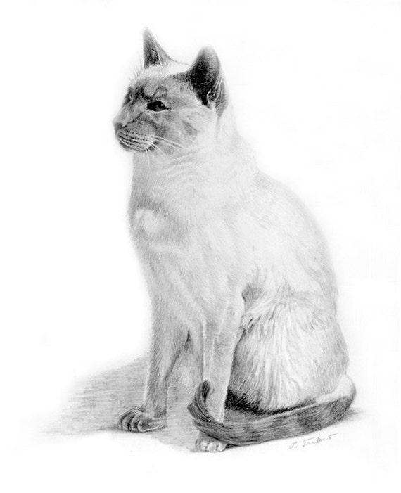 Dibujo Lapiz Gato Gato de Dibujo a Lápiz